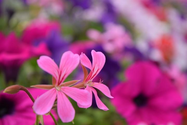 Marche, Maisons Fleuries et Exposition à Briantes